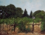 vineyard afternoon
